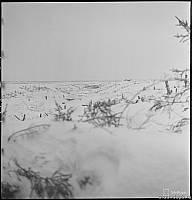 Вид на долину р.Охта и ДОТ №07 со стороны финских позиций
