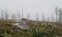 Растительность возрождается после недавнего пожара