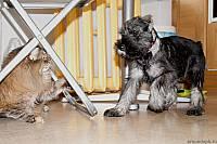 Охота на кошку Рысь