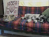 Альпен Тревел Штандарт Юнкер в возрасте 6 месяцев с кошкой Рысью на диване